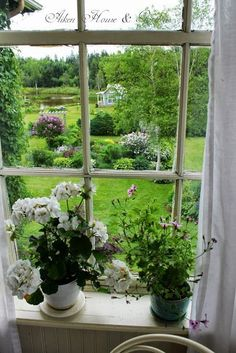 """Out of all the """"dream homes"""" I have pinned. I think this photo ranks up there with the top I LOVE all white. granny drapes, flowers old windows (at least the LOOK of old windows! I do have to admit I like the warmth of new windows! Old Windows, Windows And Doors, Cottage Living, Cottage Style, White Cottage, Cottage House, Ventana Windows, Summer Garden, Home And Garden"""
