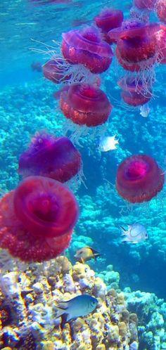 Jellyfish. Click to shop Matthew Williamson beachwear.