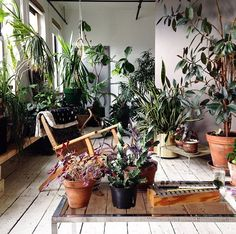 Indoor jungle - bring the outdoor in. Love how clean this still looks due to the white walls & floors