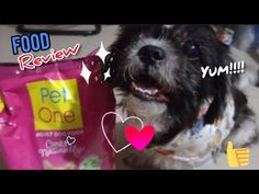 FOOD REVIEW with Lexus : SALMON STEAK and Adult Dog Food from PET ONE - YouTube Food Tasting, Food Reviews, Shih Tzu, Dog Food Recipes, Salmon, Steak, Pets, Youtube, Animals
