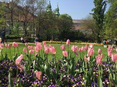 In The Heart, Budapest, Uni, Dolores Park, Travel, Viajes, Destinations, Traveling, Trips
