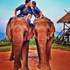 #elephant #love #beautifulcreatures #unforgettableexperience #inlove #honeymoon #jungle #amazing #instamoment #kiss