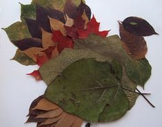 How to Make Animals From Fall Leaves   eHow.com