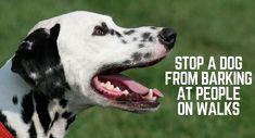 Useful Dog Obedience Training Tips – Dog Training Puppy Training Schedule, Dog Training Tips, Potty Training, Brain Training, Stop Dog Barking, Old Dogs, Boxer Dogs, Dog Behavior, Dog Walking