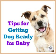 Prepping for a new baby when you've got a skittish dog requires some advance planning. Jenn's all over it, and she's sharing 7 things that seem to be working for her pup so far!
