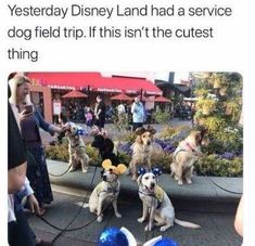 Here Is Why Service Dogs Are So Awesome (Memes) - I Can Has Cheezburger? Twenty Saints: Wholesome Service Dogs Memes - World's largest collection of cat memes and other animals Funny Animal Memes, Dog Memes, Cute Funny Animals, Funny Animal Pictures, Cute Baby Animals, Funny Cute, Funny Dogs, Animals And Pets, Cute Pictures