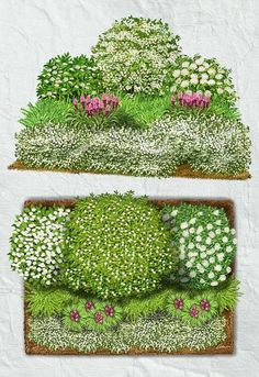 White shrub bed enlivened with some liatris (Blazing Star). Purple Garden, Colorful Garden, Landscape Plans, Landscape Design, Small Gardens, Outdoor Gardens, Perennial Garden Plans, Landscaping On A Hill, Evergreen Garden