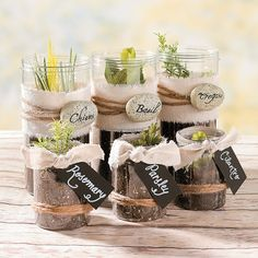 Mini Herb Garden - love this idea for favors but I wouldn't order from OTC.