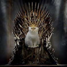 """Believe it or not, we're already halfway done with the eigth and final season of Game of Thrones. And while we've had multiple """"what the f*ck Game Of Thrones Cat, Animals And Pets, Funny Animals, Kitty Games, Night King, Four Legged, I Love Cats, This Is Us, Spade"""