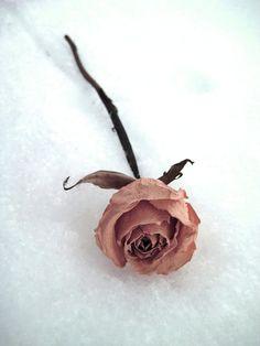 Love Like Winter by xXFilthInTheBeautyXx