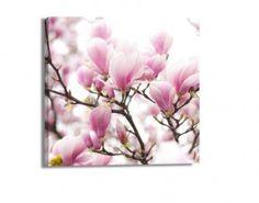 Leinwandbild Blüten am Magnolienbaum