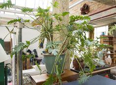 Tropical plants Flower Pots, Flowers, Large Plants, Tropical Plants, Flower Vases, Plant Pots, Planters, Royal Icing Flowers, Flower