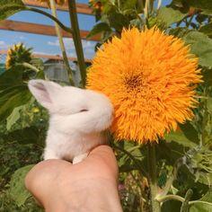 🐝🌿🌻 — Little rabbit with a sunflower 🌻 🐇 Cute Baby Bunnies, Cute Babies, Cute Animal Photos, Animal Pictures, Cute Little Animals, Animals And Pets, Cute Dogs, Kittens, Flowers