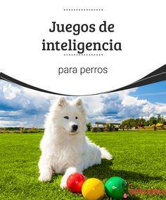Juegos de inteligencia para perros Existen numerosos juegos de inteligencia para perros que tienen como objetivo que el animal ejercite su cerebro y logre resolver distintos desafíos. #juegos #mente #perro #adiestramiento