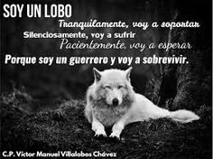 23 Mejores Imagenes De Frases De Lobos Messages Spanish Quotes Y
