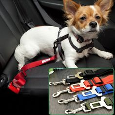Finally, the car seat that parents have been searching for is here! Our Nautilus car seat helps keep your child secure from 22 to 100 lbs. Nautilus is a Dog Seat Belt, Seat Belts, Booster Car Seat, Dog Collars & Leashes, Collar And Leash, Shopping Stores, Dog Design, Baby Gear, Car Seats