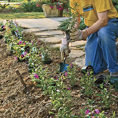Gardening Basics - How to Plant Flowers:  Follow these easy steps.