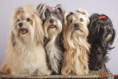 hübsche hunderassen