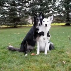 The way these two pose together #cute #pets #cutepets #pet #babblepets
