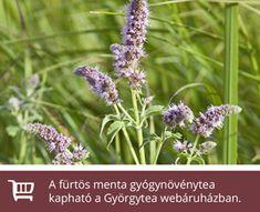 A hónap gyógynövénye a fürtös menta   Györgytea.hu Health, Plants, Mint, Health Care, Plant, Planets, Salud