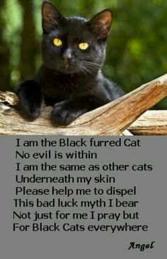 It's a sad fact that black cats in animal shelters have the lowest adoption rate and the highest euthanasia rate. Part of the problem is the silly superstitions that surround black cats. Save a life by adopting a black cat.