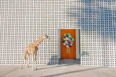 "Wild Animals Take Over A Palm Springs Hotel & Cuteness Ensues  #refinery29  http://www.refinery29.com/gray-malin-palm-springs-photo-series#slide-1  Welcome To The Parker""I really wanted to create an image welcoming you to your stay and express the excitement behind the large entrance doors,"" Malin told us. ""I love this shot of the giraffe with the balloons because it evokes that emotion you feel when you arrive to an exciting destination for a weekend away."""