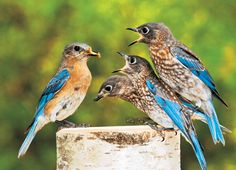 Backyard Photo Contest | Birds & Blooms