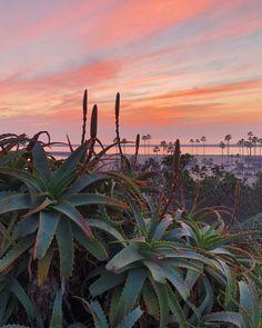 #succulentporn  #sunsetporn