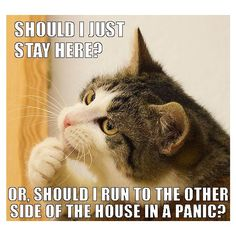 25 funny cat memes, part 2 ❤ liked on Polyvore featuring home, home decor and cat home decor