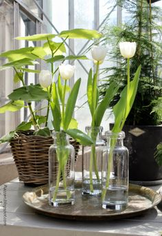 Piazzan: Floramor och Krukatös i Trädgårdsföreningen
