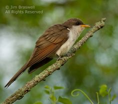 Birding From a Kayak (Part 2), Especially If You Know the Time by Jim Braswell