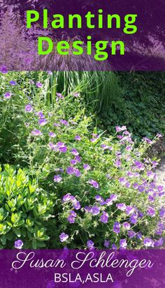 This perennials is called Geranium 'Johnson's Blue'. It flowers almost all season long! It looks great next to grasses, such as Fountain Grass. You can also consider Geranium 'Roxanne' which is similar.