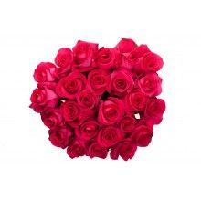Two Dozen Hot Pink Roses Bouquet
