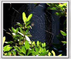 Para fotografiar la naturaleza se requiere en primer lugar una alta dosis de paciencia y en segundo lugar tomar muchísimas imágenes.