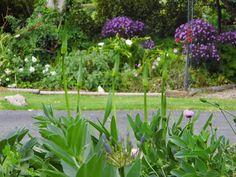 One Mother Hen: 5 good things in the garden South Australia, Good Things, Garden, Plants, Garten, Lawn And Garden, Gardens, Plant, Gardening