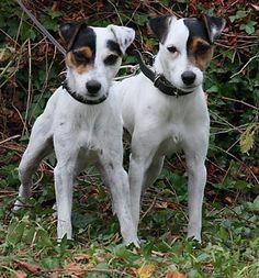 Compartimos planeta con estas dos...gotas de agua caninas.
