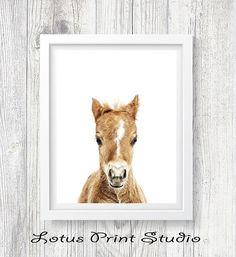 Horse Print Baby Horse Wall Art Foal Farm Animal Girls