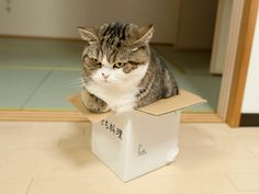 maru the cat みっちり