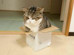 maru the cat みっちり