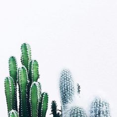 Pinterest // AVA SOUTHWELL