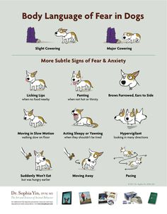 Body Language of Fear in Dogs.... many people need to see this