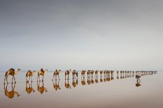 Travel: Coming to get salt, by Jørgen Johanson 'The Danakil Depression in Ethiopia is among the hottest and most inhospitable places on earth. It is also one of the lowest, and Asale lake is 116 metres below sea level. The Afar people are extracting salt here, using camels for transport.'