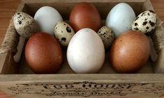 Zemiakový chlieb z droždia – moje malé veľké radosti Ciabatta, Eggs, Breakfast, Food, Morning Coffee, Essen, Egg, Meals, Yemek