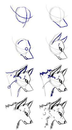 This is just the simplified process of drawing a wolf head that I follow. Some parts are a little more exaggerated (like the eyes) making it more cartoonic, but the fun thing about cartoons is you ...