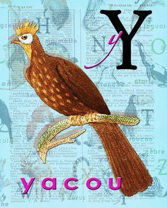 Y for YACOU.Alphabet Ornithology Decor animals par BerniesArtPrints
