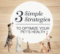 3 simple strategies to optimize your pet's health