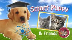 ey! Do you want to know what causes magnetism, have a real sense of how small atoms are, or see that sometimes physics allows things that, well, seem like magic?  Or, do you just want to watch cute puppies and kitties? Well, now you can have both! Smart Puppy and Friends is a new series of short science videos for kids.  http://www.ucsd.tv/smart%2Dpuppy/  #scienceforkids #shortvideos  5 episodes so far #SmartPuppy & Friends #science