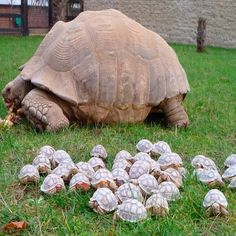 Handful of tortoises