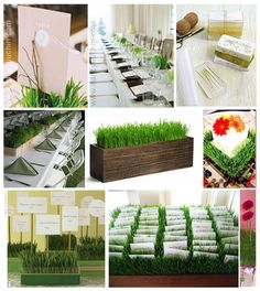 Create cheap, easy centerpieces or decorations with wooden containers and wheatgrass... just plant a few weeks before the wedding, and let nature take care of the décor!