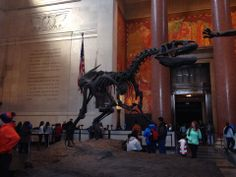 Creatures of Light at the American Museum of Natural History. Free the last hour 4:45-5:45